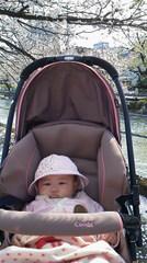 桜とななちゃん